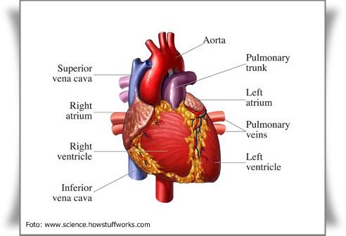 jantung merupakan silent killer nomer satu di dunia. Banyak orang