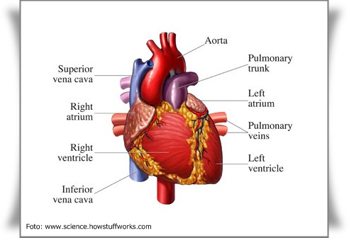 Penyakit jantung merupakan silent killer nomer satu di dunia. Banyak
