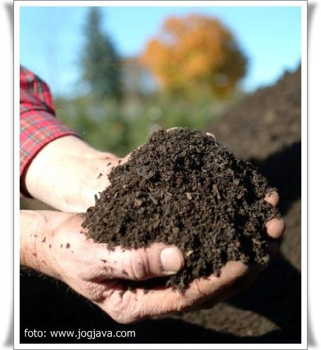 Download Images of kompos merupakan hasil fermentasi atau dekomposisi