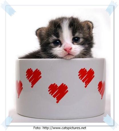 Kumpulan Foto-Foto Kucing Lucu - Binatang - CARApedia