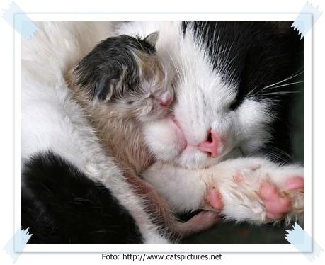 Kumpulan Foto Foto Kucing Lucu Binatang Carapedia