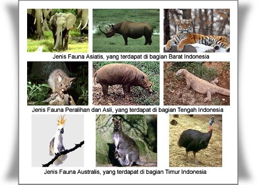 Penyebaran Flora dan Fauna di Indonesia